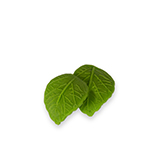Frunze din zahar mari verzi deschis 0700020 PJT set 120 buc
