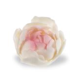 Bujor din zahar mare alb roz umbrit 056200/c03 PJT set 12 buc