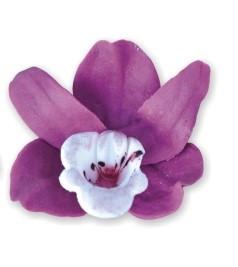 Orhidee AMARANT 12 buc/cutie 010 DEK